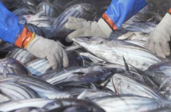 【気仙沼観光推進機構ホームページ】気仙沼さ来てけらいん 魚市場見学コース(外部ページへ飛びます)